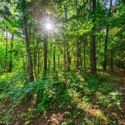 Depositphotos 79993200 stock photo trees of wild forest