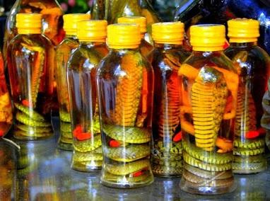 Fabriquer alcool riz cobra asie vietnam