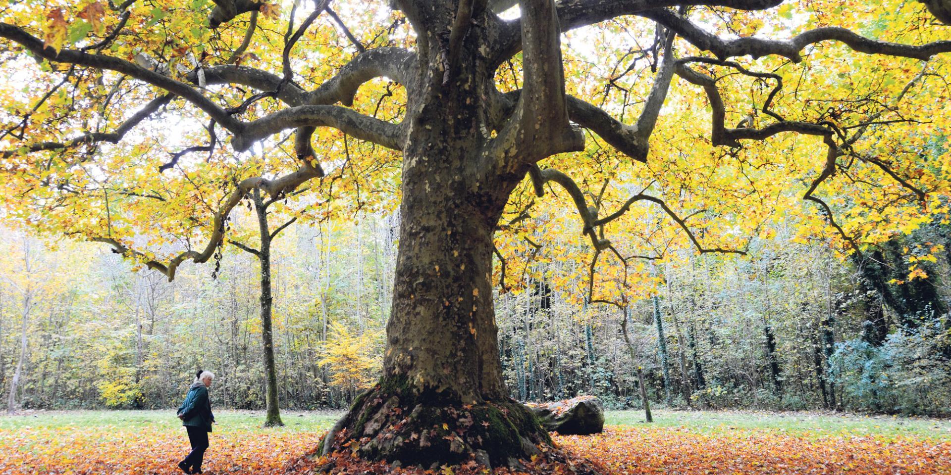 L ile de france veut proteger ses arbres remarquables