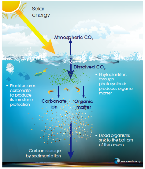 Ocean climate acidification