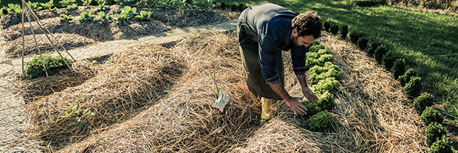 Shutterstock paillage tonte de pelouse jardin bio 00 ban